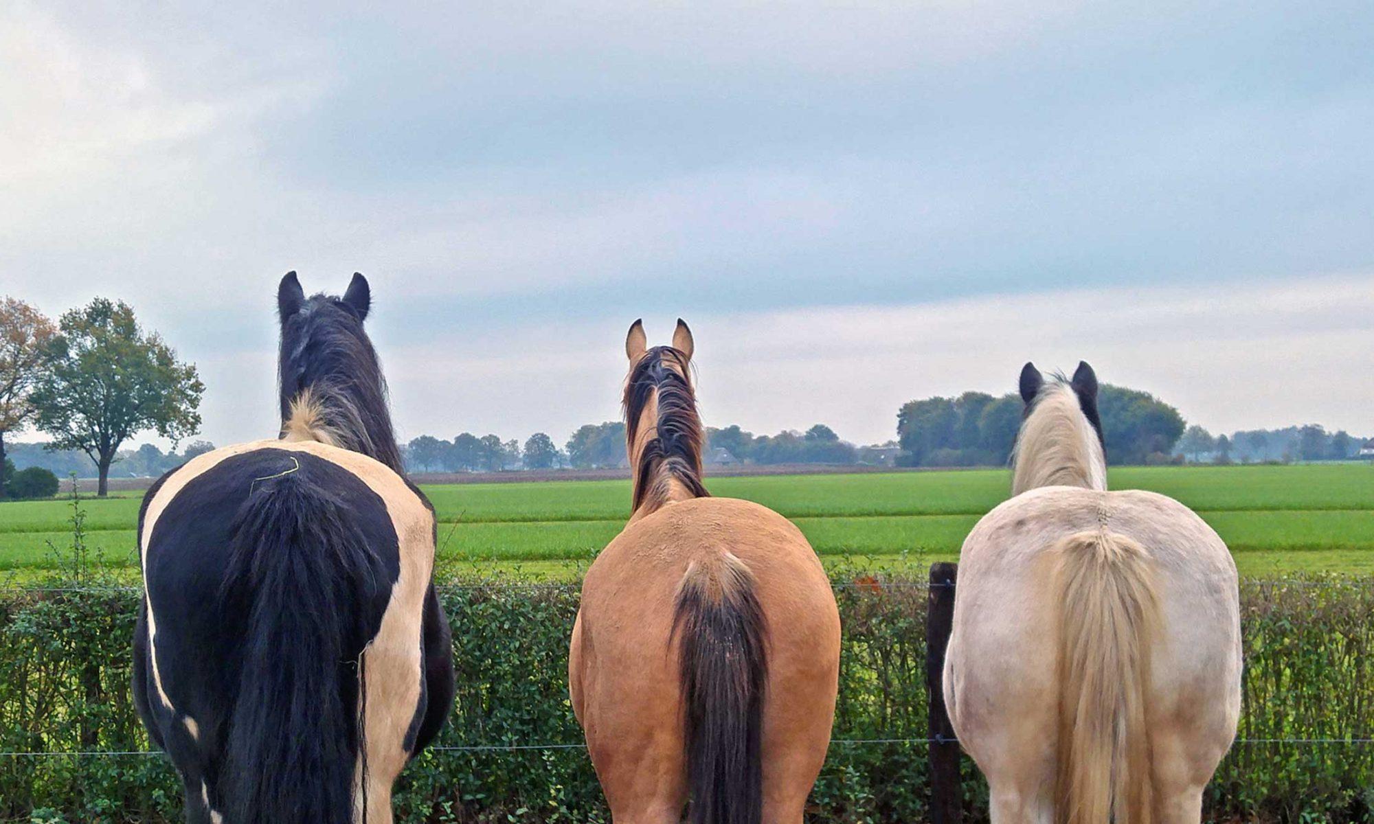 De Paardenmanier